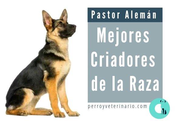Pastor Alemán Criadores