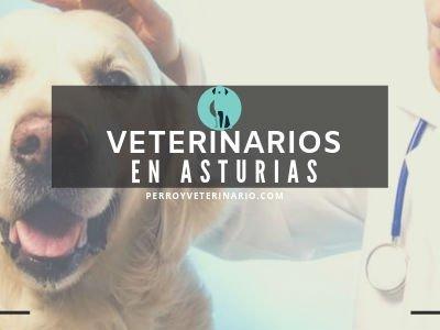 Veterinario en Asturias