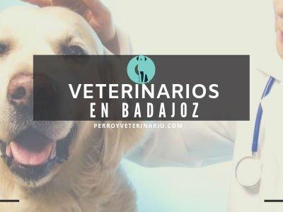 Veterinario en Badajoz