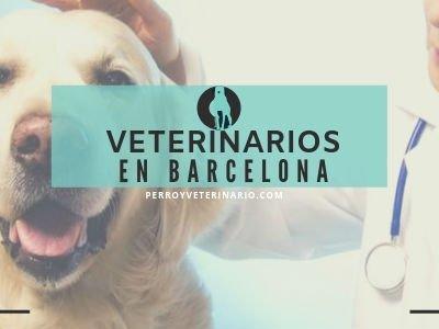 Veterinario Barcelona
