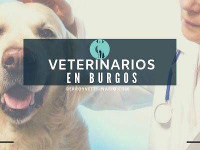 Veterinario Burgos