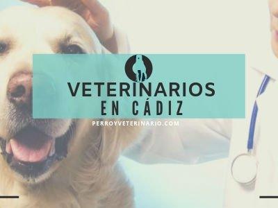 Veterinario en Cadiz